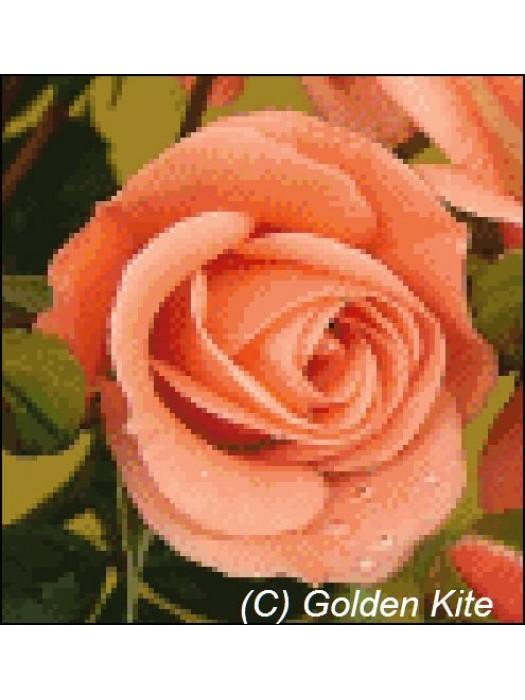 Роза 450 Голден Кайт